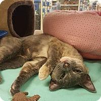 Adopt A Pet :: Maisy - Bensalem, PA