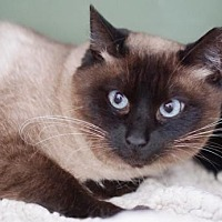 Adopt A Pet :: Sally - Alameda, CA