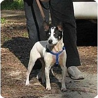 Adopt A Pet :: Snoopy cs - Thomaston, GA