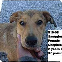 Adopt A Pet :: Snuggles - RESCUED! - Zanesville, OH