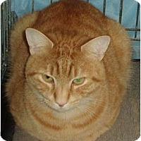 Adopt A Pet :: Frankie Doodle - Westfield, MA