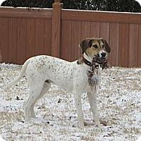 Adopt A Pet :: Waylon Jennings - Knoxville, TN