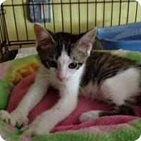 Adopt A Pet :: Paulie - Byron Center, MI