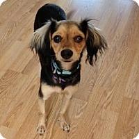 Adopt A Pet :: Cherry - Calgary, AB