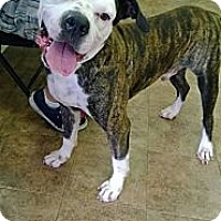 Adopt A Pet :: Max - Miami, FL
