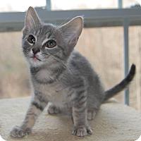 Adopt A Pet :: Greya - McDonough, GA