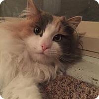 Adopt A Pet :: Sally - Ogden, UT