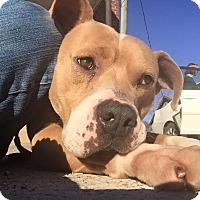 Adopt A Pet :: Hatter - Lewisburg, TN