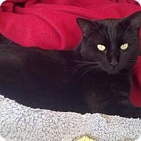 Adopt A Pet :: Ben - Scottsdale, AZ