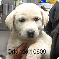 Adopt A Pet :: Orlando - baltimore, MD