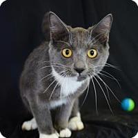 Adopt A Pet :: Larry - Bradenton, FL