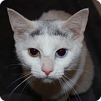 Adopt A Pet :: Darma - Fairfax, VA