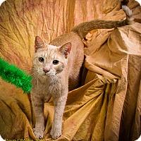 Adopt A Pet :: HARDY - Anna, IL