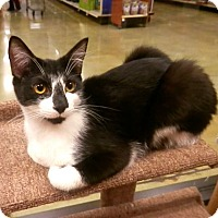 Adopt A Pet :: Mila - Hallandale, FL