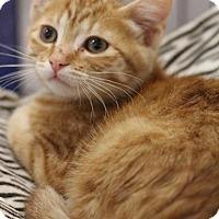 Adopt A Pet :: Julius - Sacramento, CA