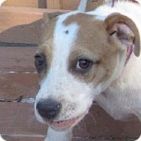 Adopt A Pet :: Opal - Oakland, AR