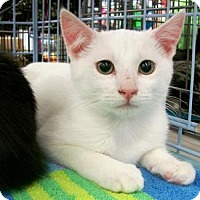 Adopt A Pet :: Dillon - Castro Valley, CA