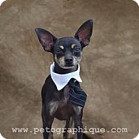 Adopt A Pet :: Rex - Las Vegas, NV