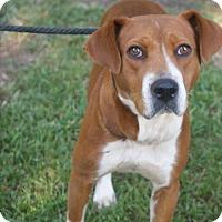Adopt A Pet :: Stella - Kinston, NC