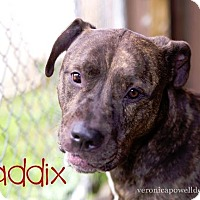 Adopt A Pet :: Maddix - Kendallville, IN