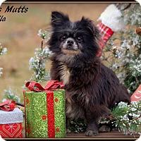 Adopt A Pet :: Leila - Dixon, KY