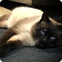 Adopt A Pet :: Simon - Redwood Falls, MN