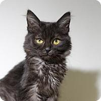 Adopt A Pet :: Viktor - Chino Hills - Chino Hills, CA
