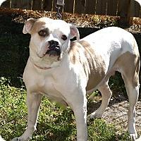 Adopt A Pet :: Momma  Mia - Englewood, FL