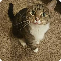 Adopt A Pet :: Abby - $50 adoption fee - South Bend, IN