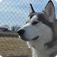 Adopt A Pet :: Mammuk - Grinnell, IA