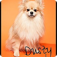 Adopt A Pet :: Dusty - Orange, CA