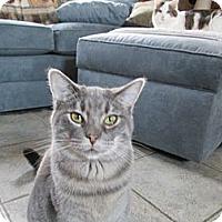 Adopt A Pet :: Gary - Richland, MI