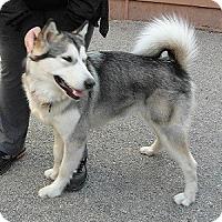 Adopt A Pet :: Bliss - Hamilton, ON