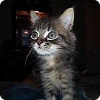 Adopt A Pet :: Gru - Xenia, OH