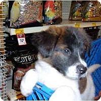 Adopt A Pet :: Piper - No.Charleston, SC