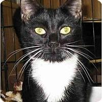 Adopt A Pet :: Lucy - Plainville, MA