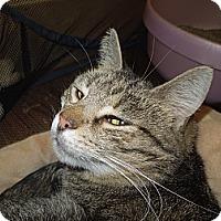 Adopt A Pet :: Manny - Medina, OH