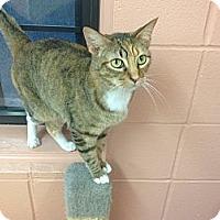 Adopt A Pet :: Bonnie - Lake Charles, LA