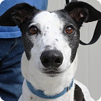 Adopt A Pet :: Madden - Rancho Santa Margarita, CA