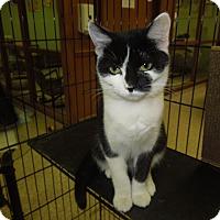 Adopt A Pet :: Sally - Medina, OH