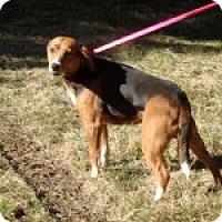 Adopt A Pet :: Josie - Dumfries, VA