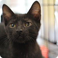 Adopt A Pet :: Ziggy - Richmond, VA