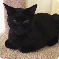 Adopt A Pet :: Luna - N. Billerica, MA