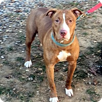 Adopt A Pet :: Double Bubble - Bloomfield, CT