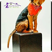 Adopt A Pet :: Ryder - Richardson, TX