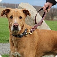 Adopt A Pet :: Milo - Elyria, OH