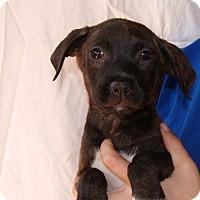 Adopt A Pet :: Cabo - Oviedo, FL