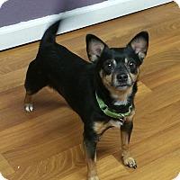 Adopt A Pet :: Jetson - Lisbon, OH