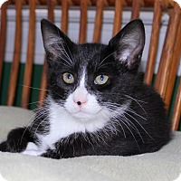 Adopt A Pet :: Stark - Fairfax, VA