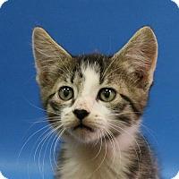 Adopt A Pet :: Stevie - Overland Park, KS